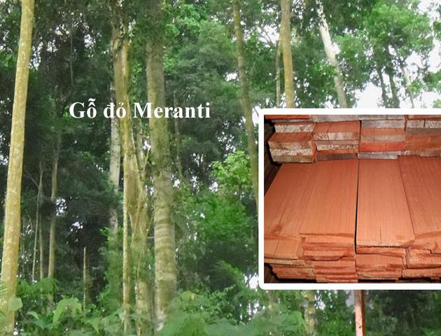 gỗ nhà yến