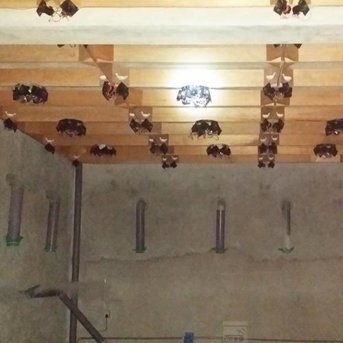 Làm thế nào để chống nấm mốc cho nhà yến trong mùa mưa?
